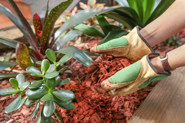 Pine Mulch for Your Garden