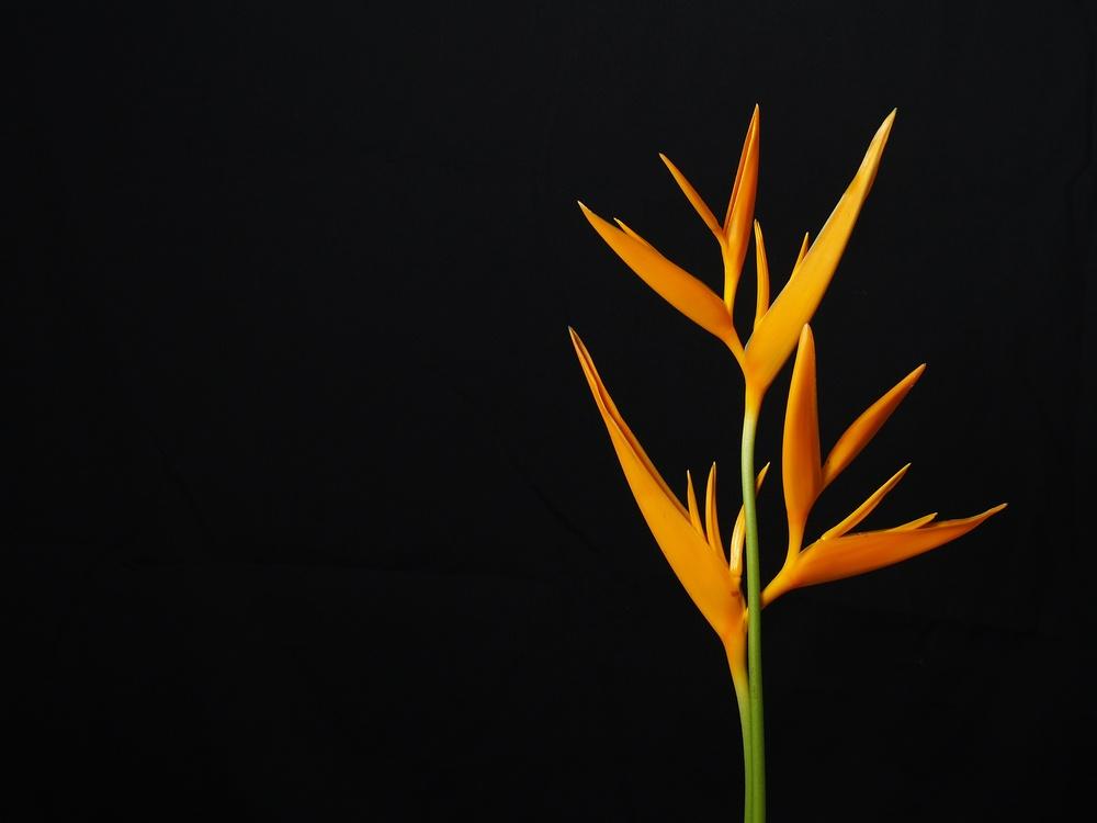 Active Plant