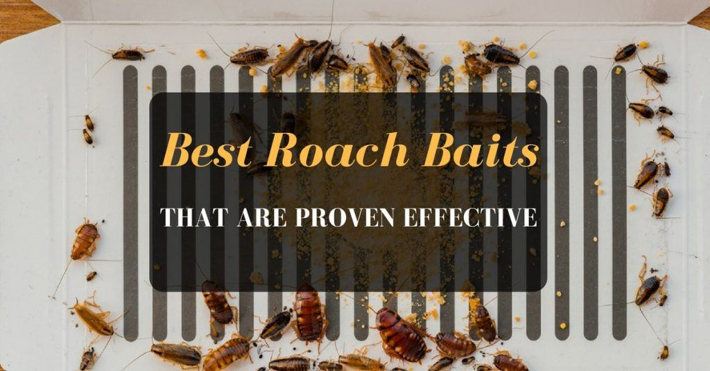 Best Roach Baits that are Proven Effective