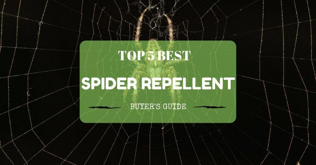 Best Spider Repellent Reviews - Buyer's Guide