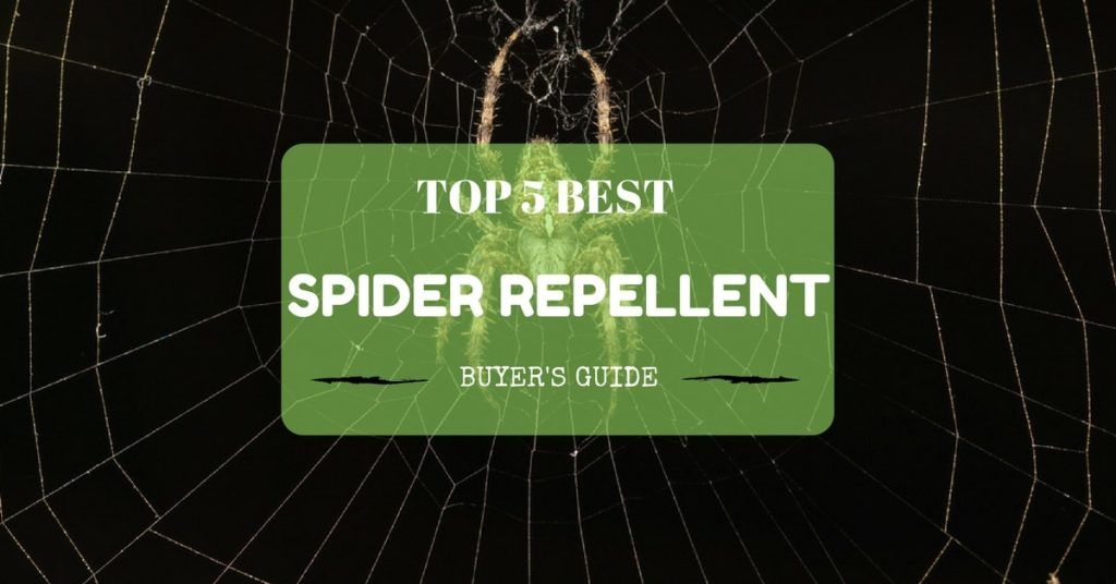 Best Spider Repellent Reviews - Buyer's Guide