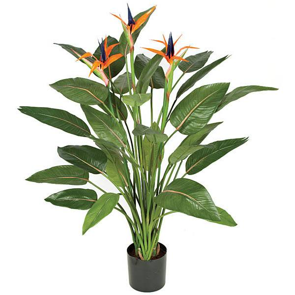 Repotting bird of paradise plant pot