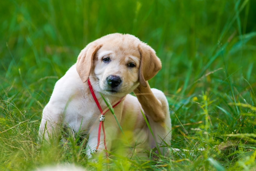 How to choose the best fogger for fleas