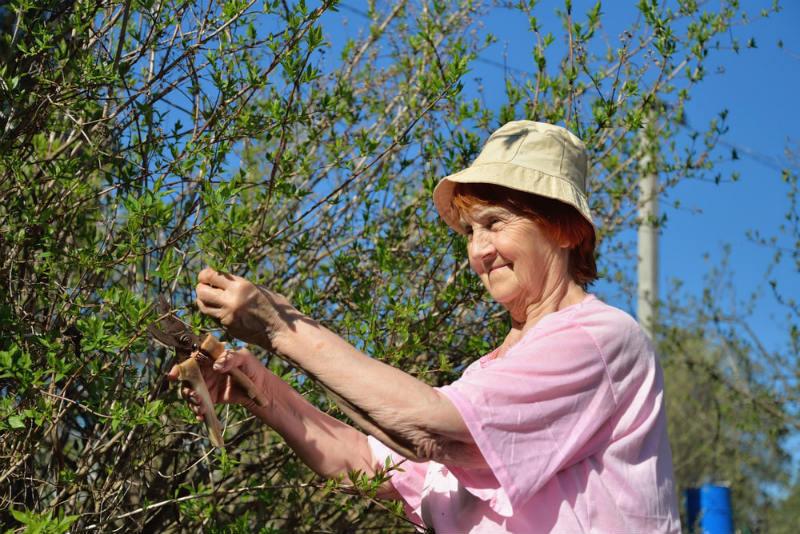 pruning night blooming jasmine