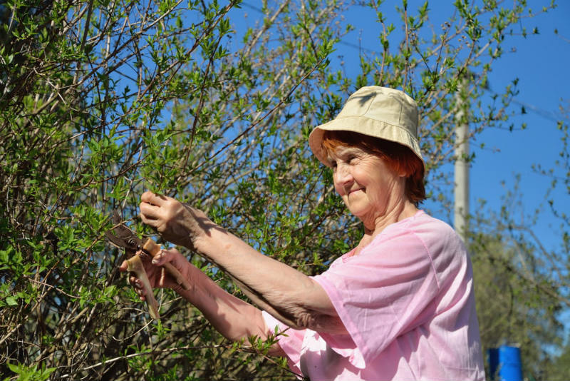 Remember prune night blooming jasmin