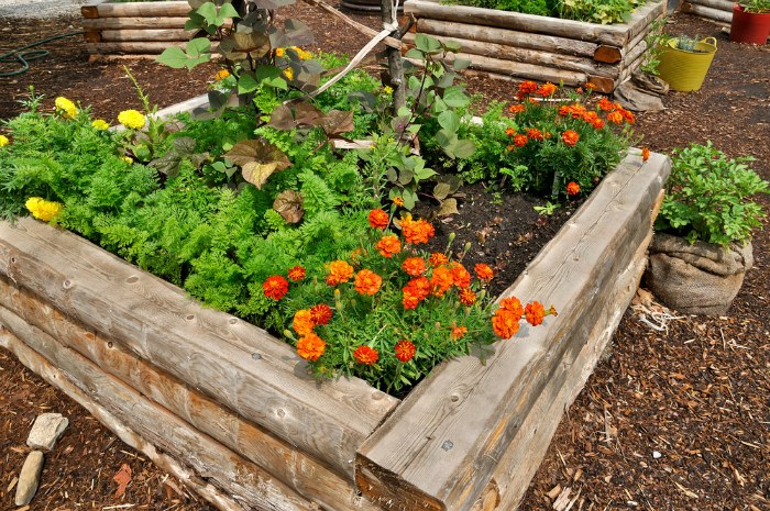 How Much Food Can You Grow In A Raised Bed