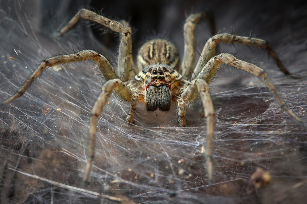 Areas Where Spiders are Hiding