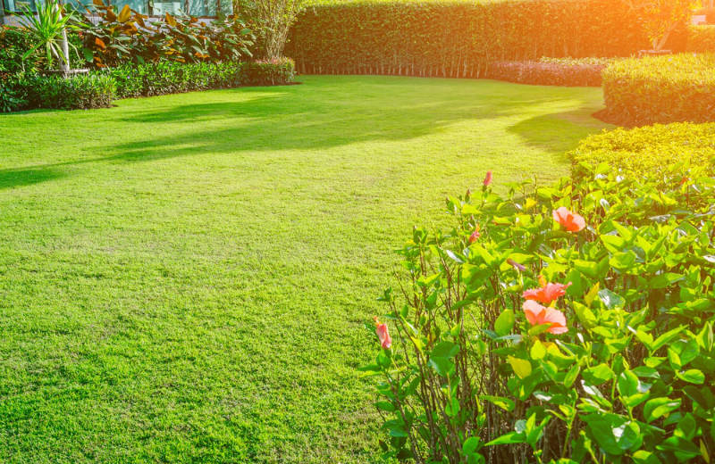 Determine if indoor sunlight is enough for your Strelitzia