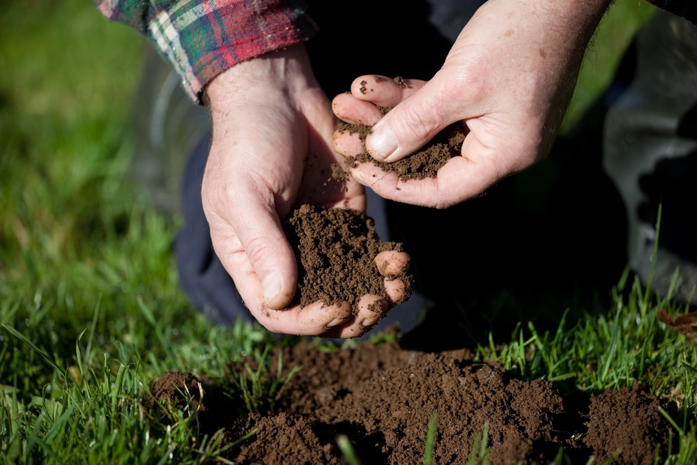 horticulture and soil