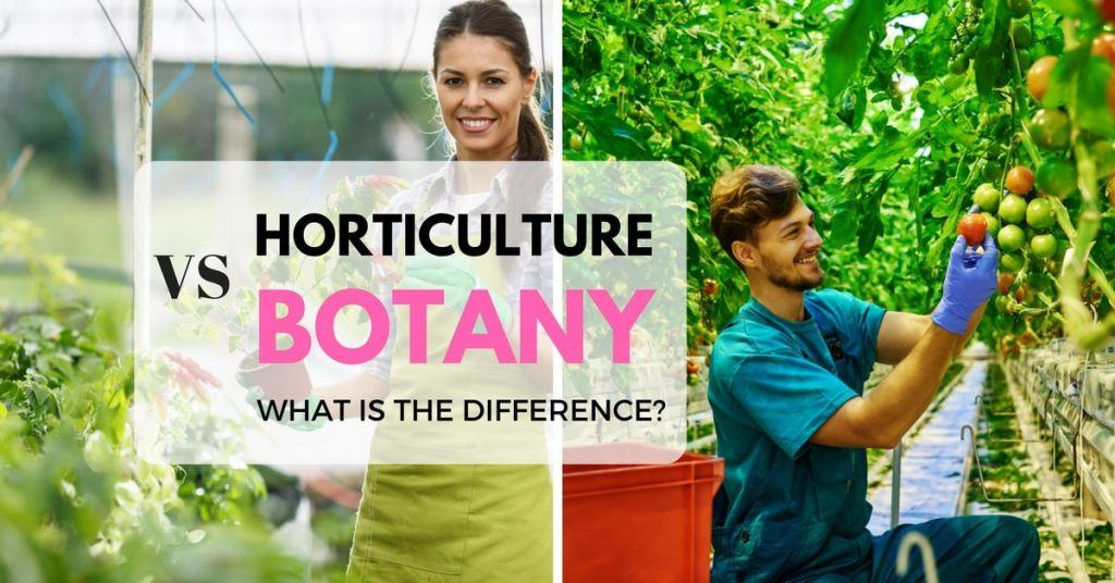 Horticulture vs. Botany: what's the difference?