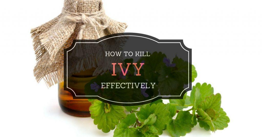 How to kill ivy effectively