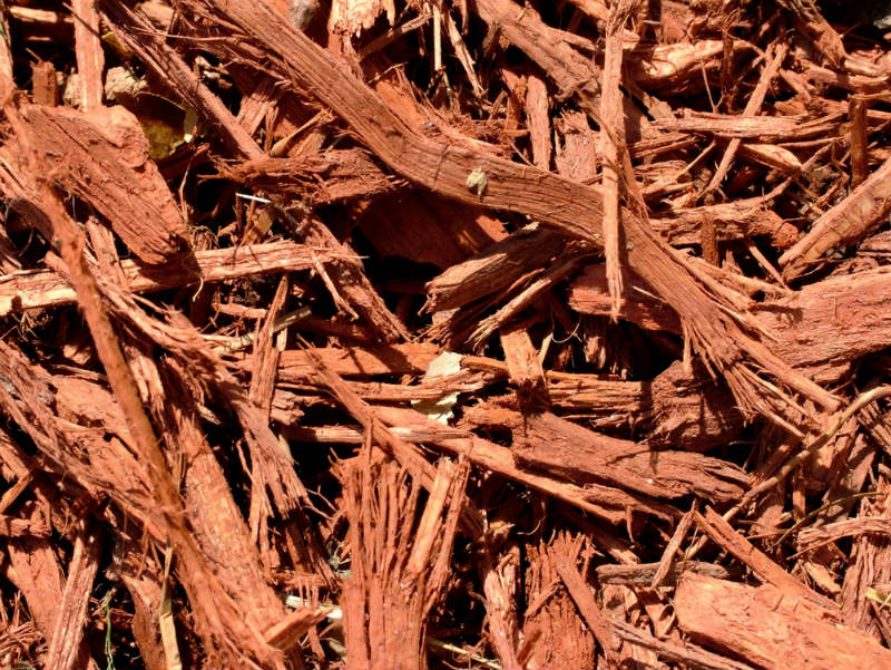 Cypress Mulch for Your Garden