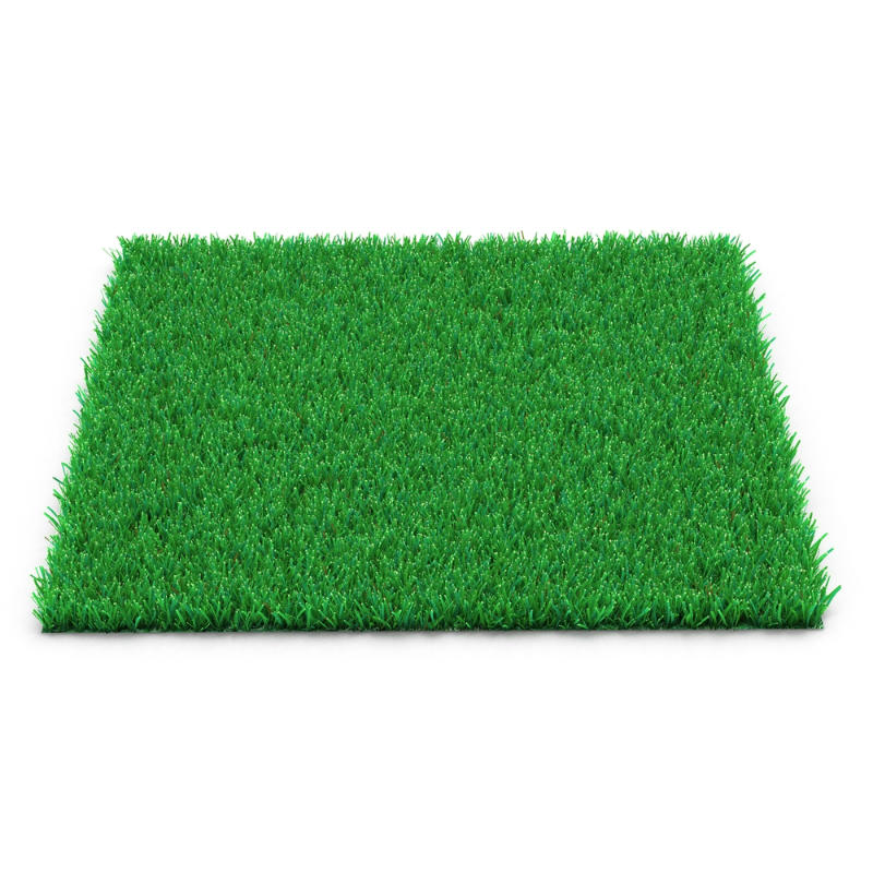 Kentucky bluegrass (grass for cool season)