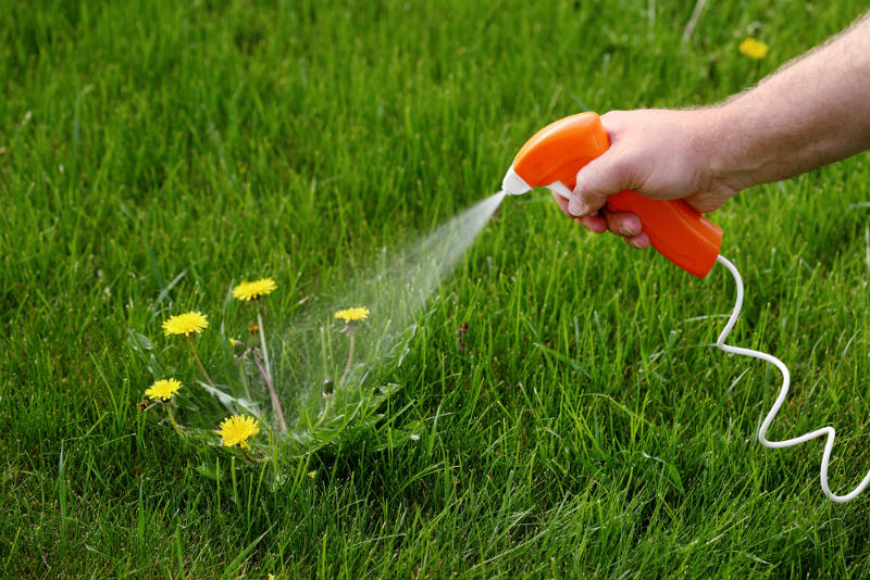Using Herbicides to Kill Grasses