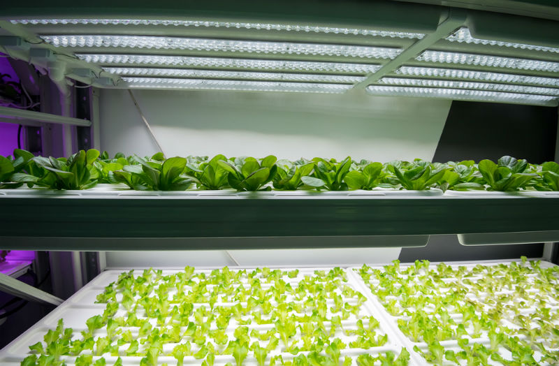 The Advantages Of Using LED Grow Lights