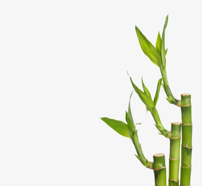 So How Fast Does Bamboo Grow?