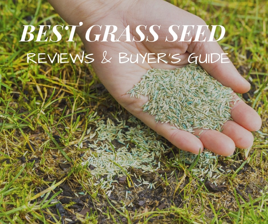 Best Grass seed reviews & buying's guide