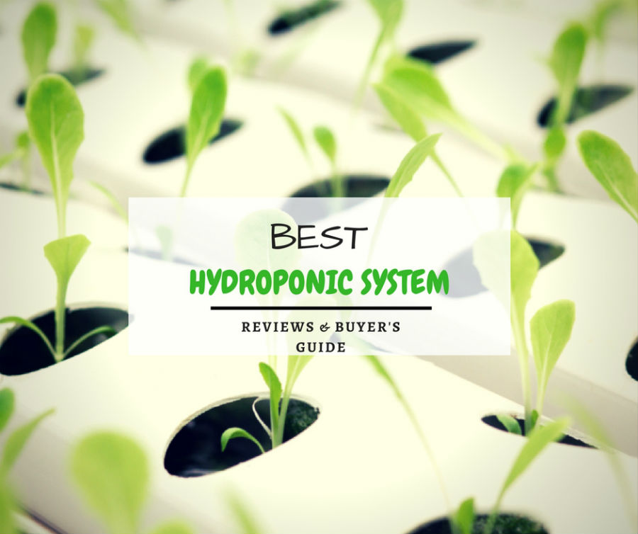 Best Hydroponic System Reviews & Buyer's Guide