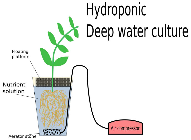 Deep water culture system (DWC)