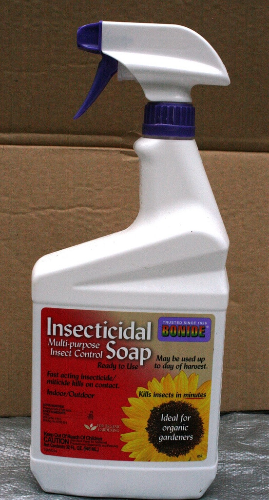 insecticidal soap to remove infestations of bugs