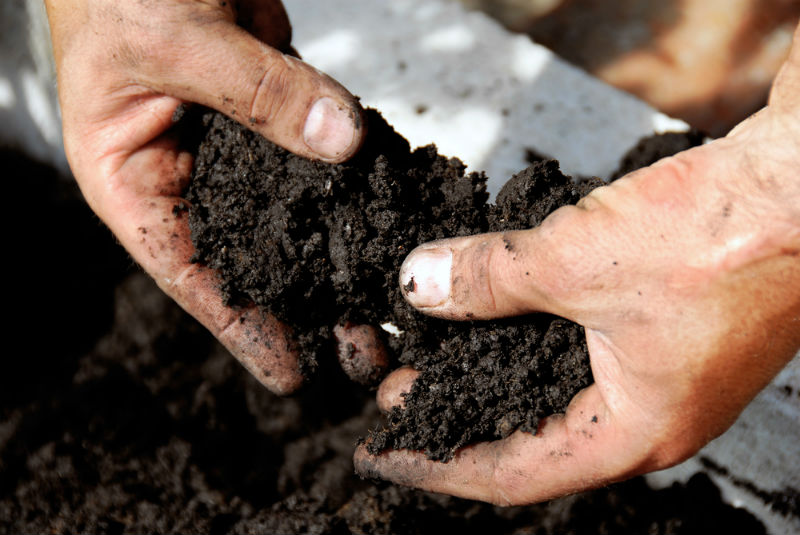Using Organic Soil that is High in Quality