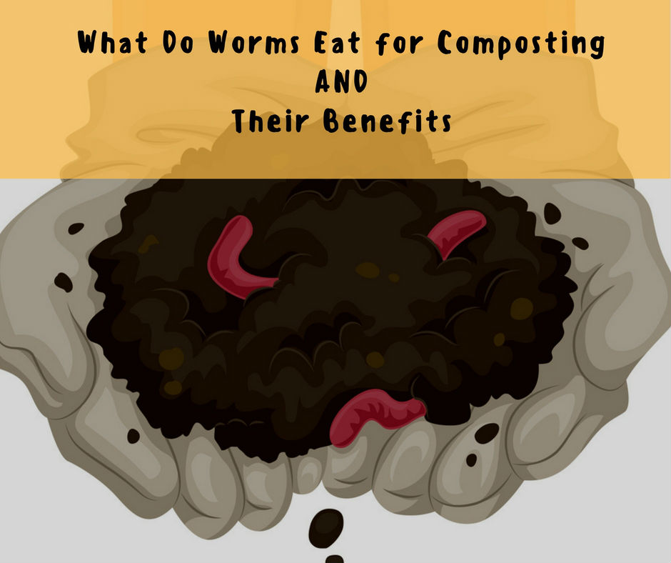 What do worms eat for composting and their benefits