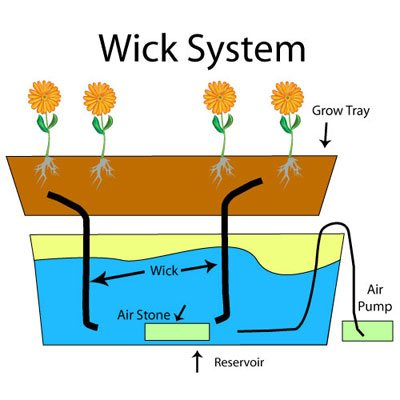 Wick Type Hydroponic System