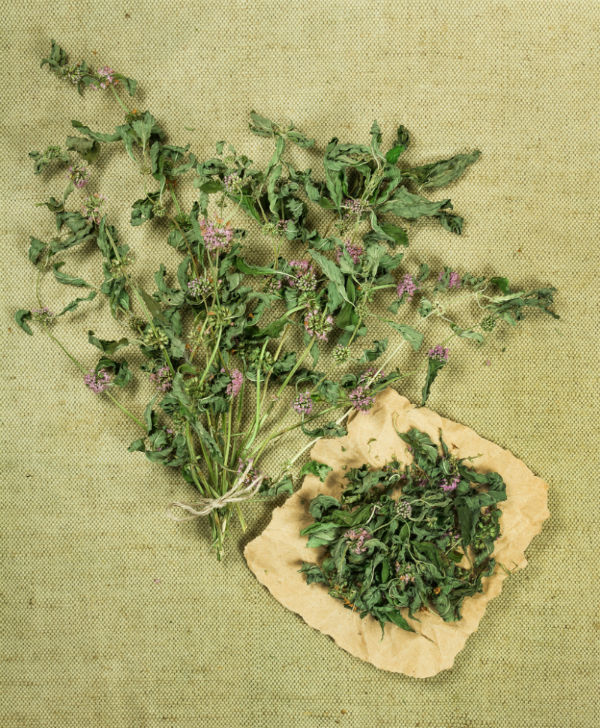 Uses of Spearmint
