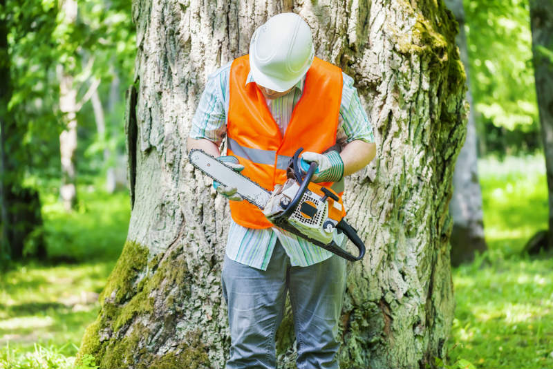 Doing a Safety Check to chainsaw