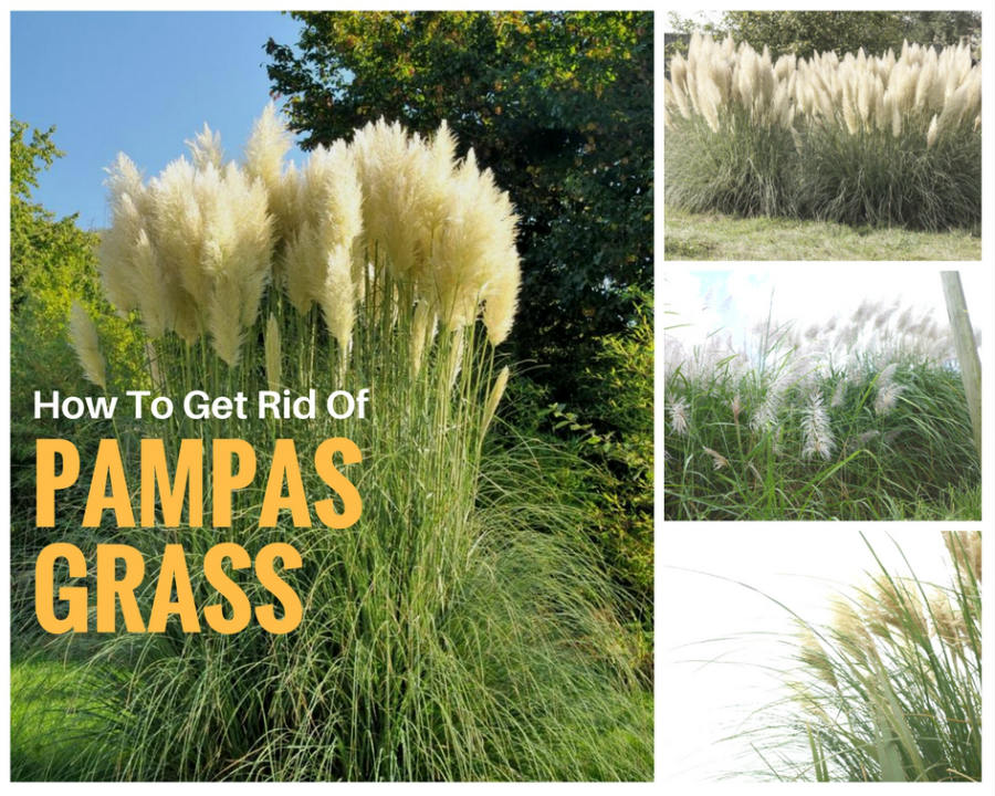 how to get rid of weeds and grow grass naturally