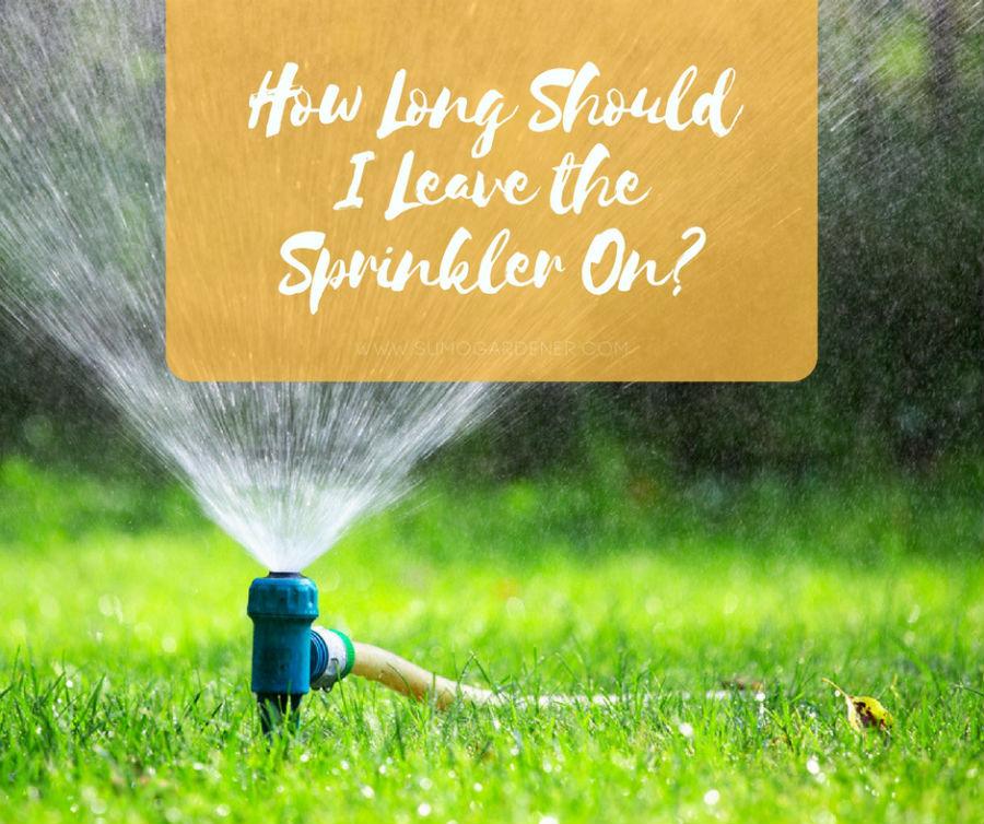 How Long Should I Leave the Sprinkler On?