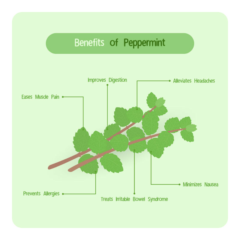Peppermint's Health Benefits