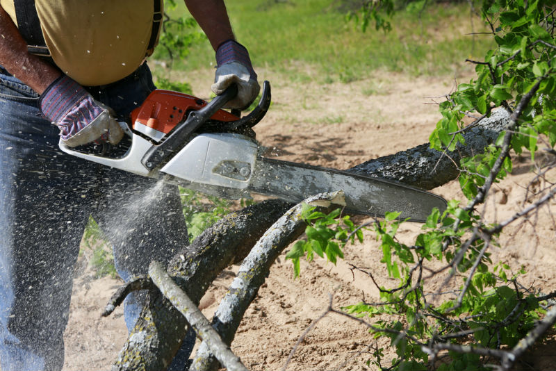 What Professional Chainsaw is Right for you?