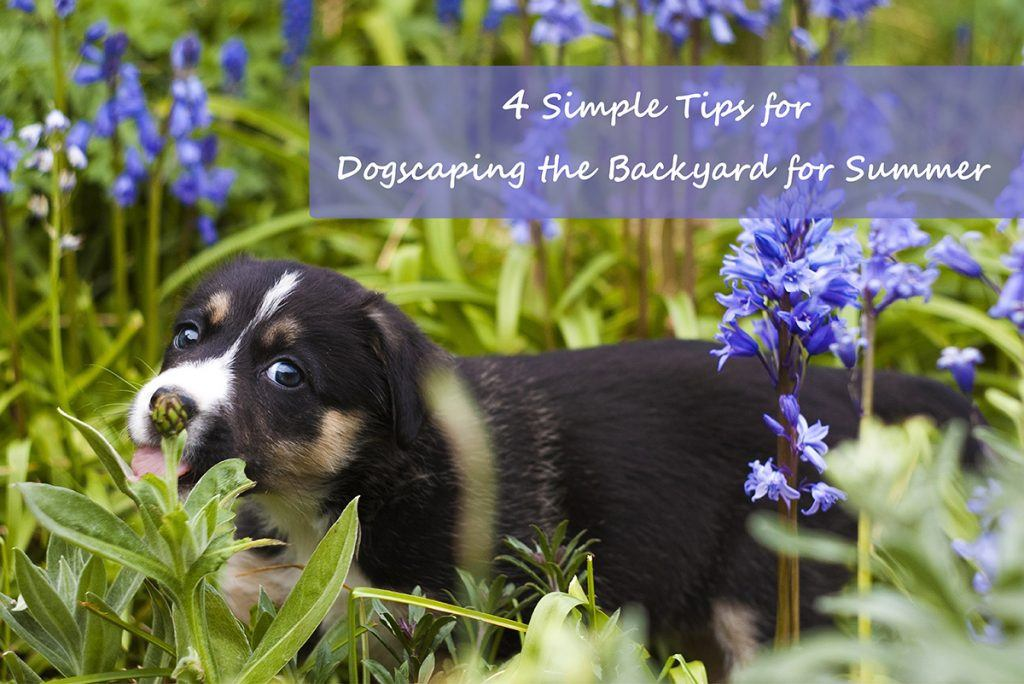 4 Simple Tips for Dogscaping the Backyard for Summer