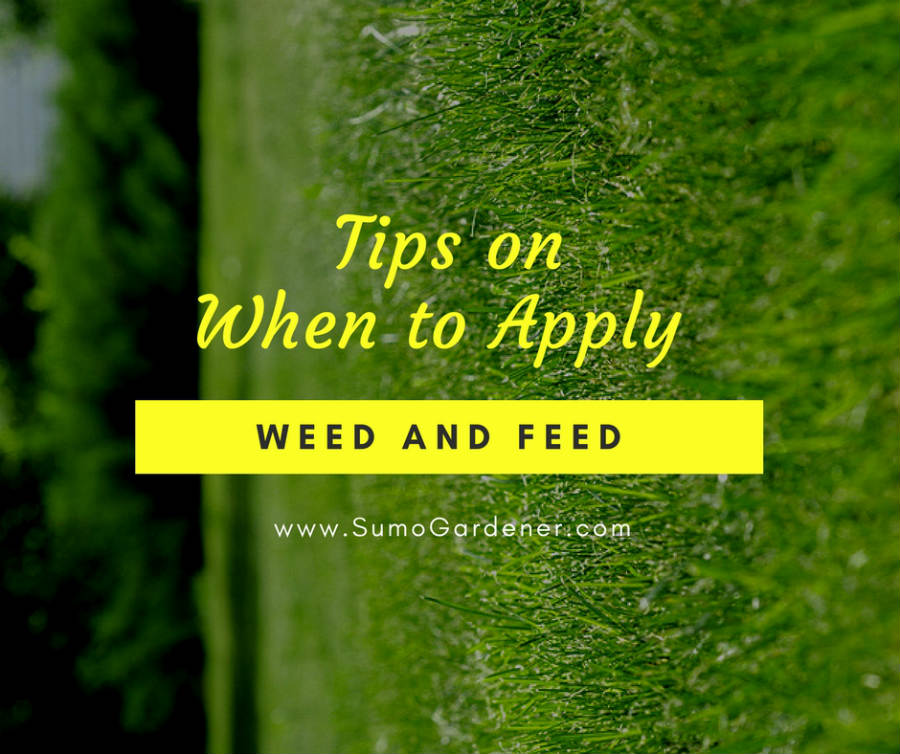 Tips on when to apply weed and feed