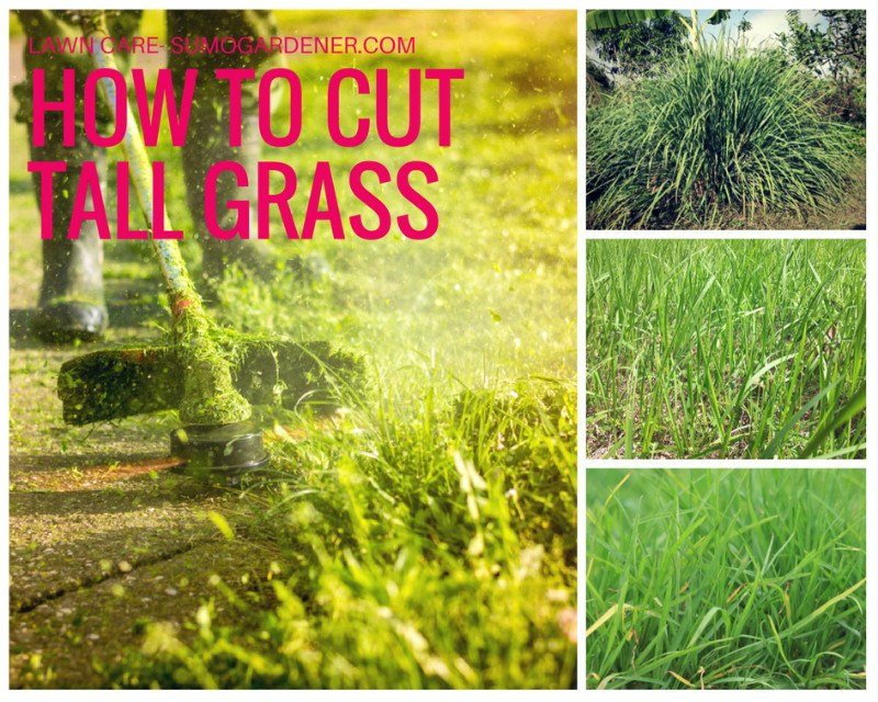 How to cut tall grass