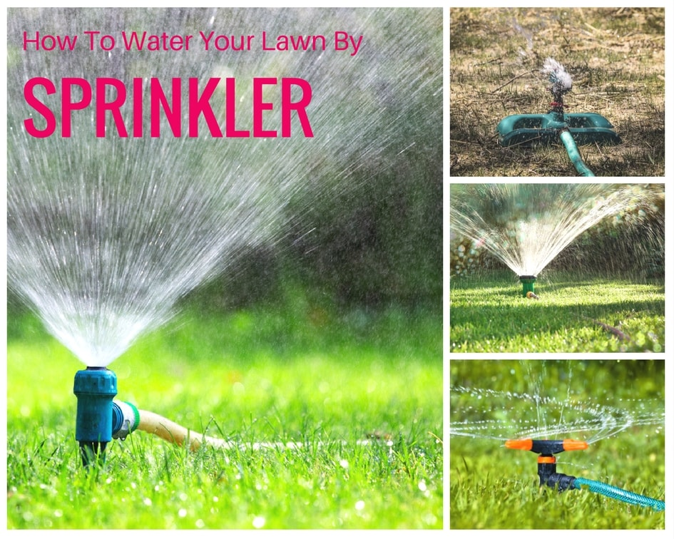 How to water your lawn by sprinkler
