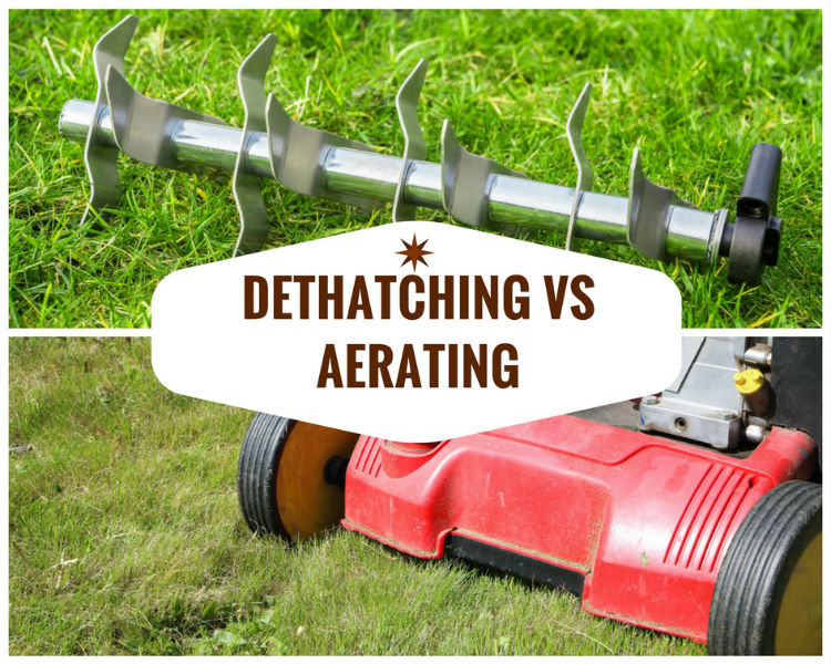 Dethatching Vs Aerating Tips For A Better Lawn Sumo