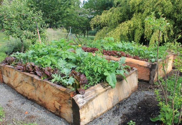 DIY Raised Garden Beds - SkyNursery
