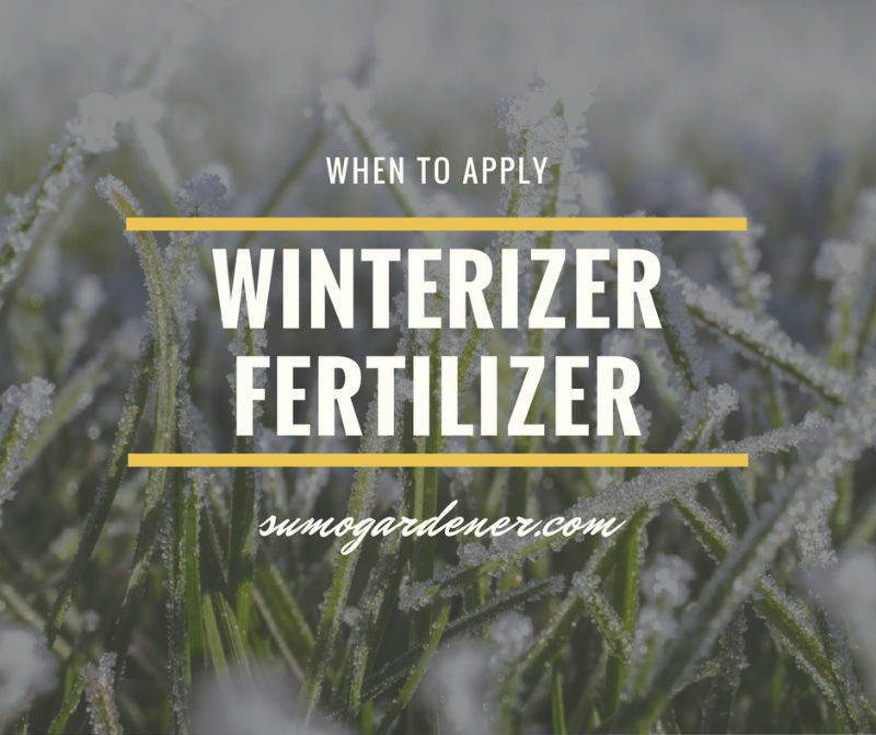 When to apply winterizer fertilizer