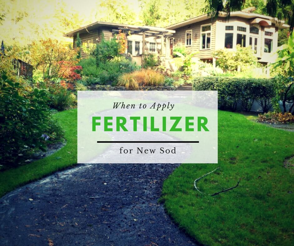 When to Apply Fertilizer for new sod