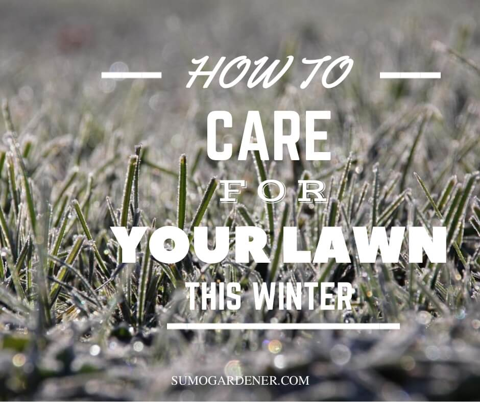 Lawn care for your lawn in winter