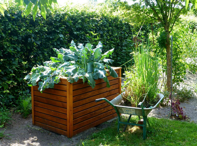 How to get started with raised garden beds