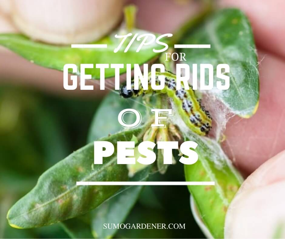 Tips for getting rids of pests