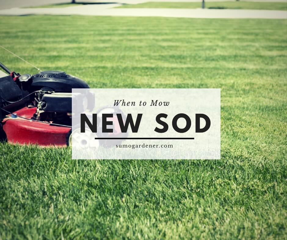 When to mow new sod
