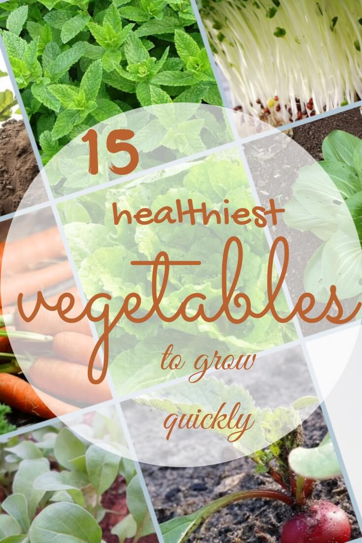 10 Healthiest vegetables to grow quickly