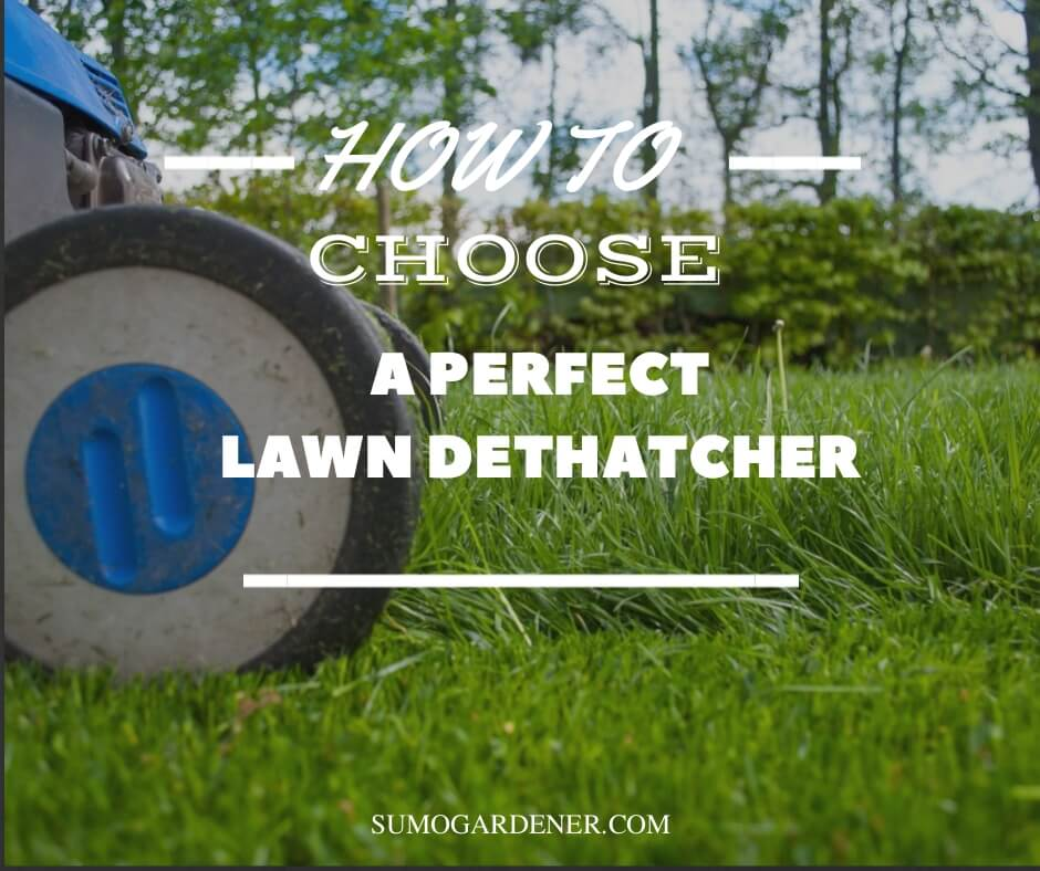 How to choose a perfect lawn dethatcher
