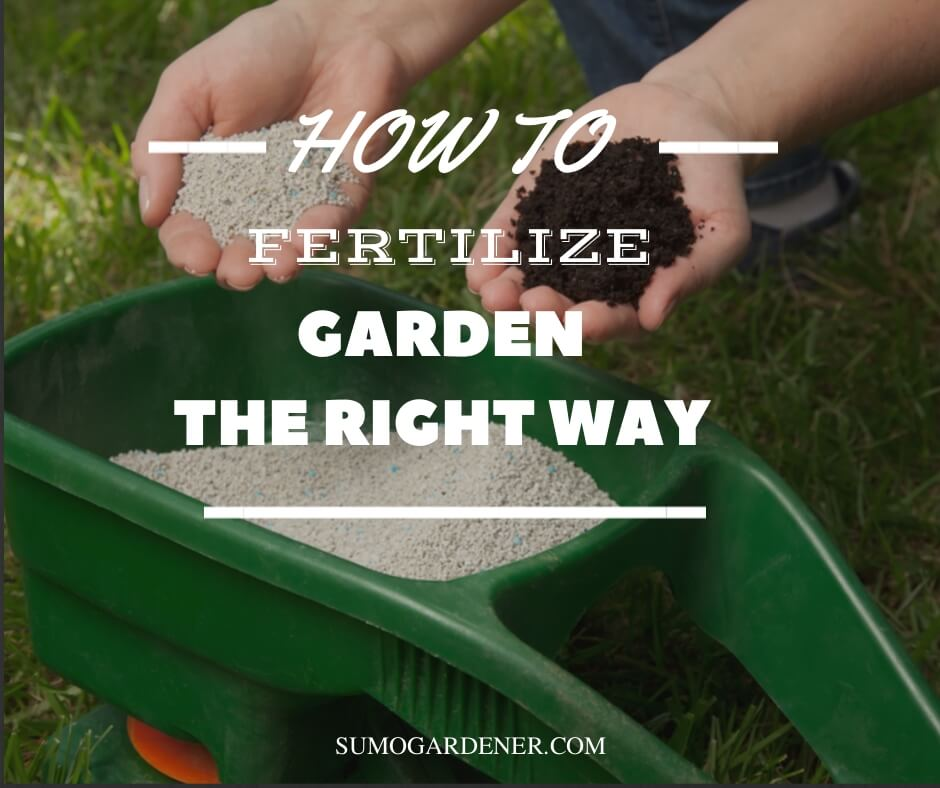 How to fertilize garden the right way