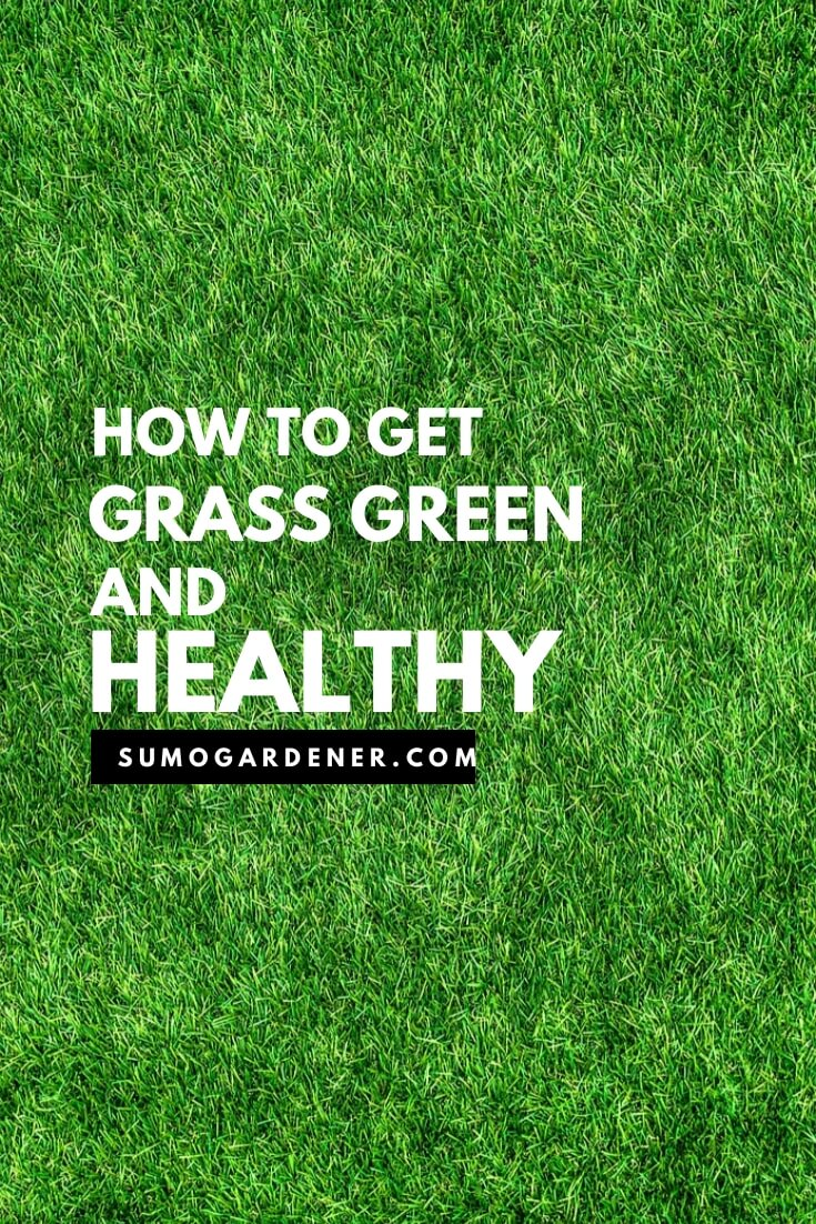 How to get grass green and healthy