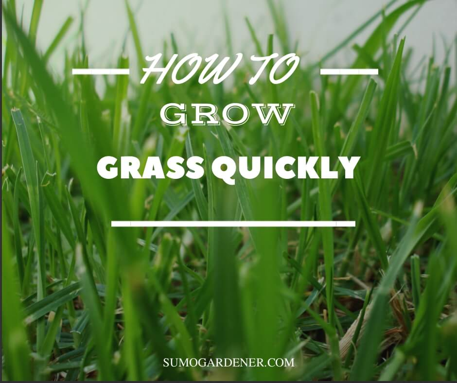 How to grow grass quickly